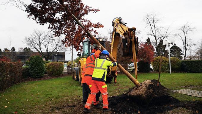 Un nouvel arbre square Saint-Gilles